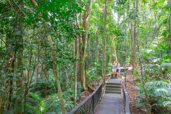 Rumrum creek walk Kuranda